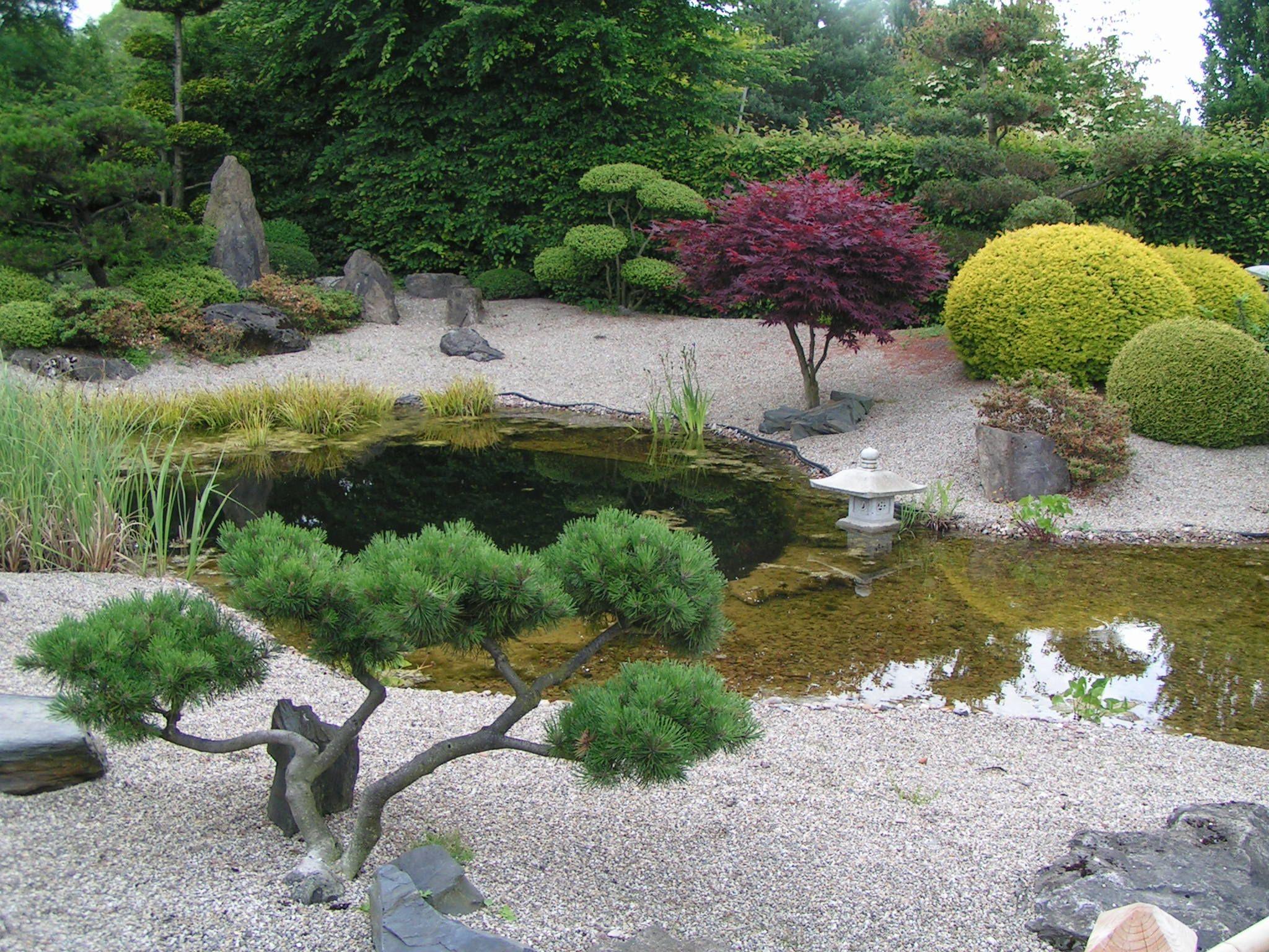 park im garten GoogleSuche Conifers Pinterest Gardens