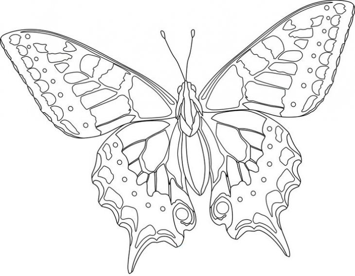 realistic butterflies coloring pages - photo#19