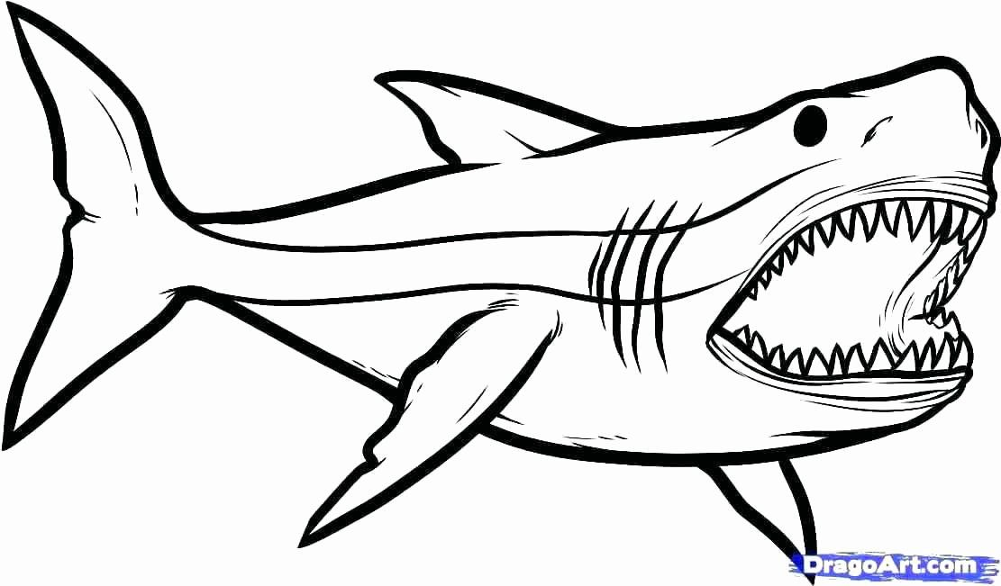 Whale Shark Coloring Page Inspirational Whale Shark Coloring Pages Print Coloring Shark Coloring Pages Shark Drawing Great White Shark Drawing