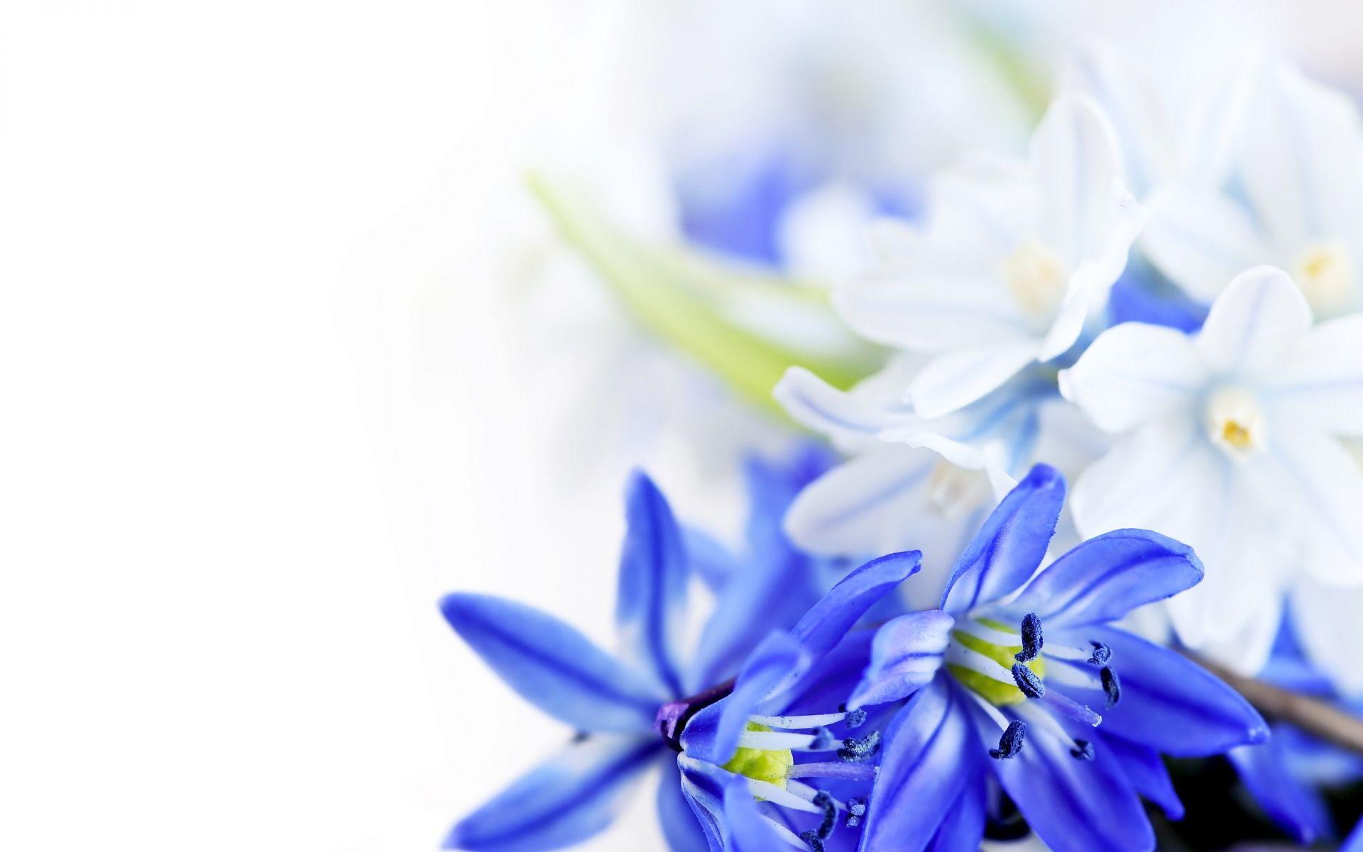 Blue White Flowers 1920×1200 White flower wallpaper