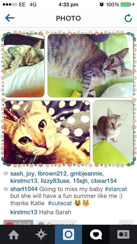 Cute Cat Dubai Cats Cute Cat Pet Ownership
