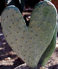 Catus heart, handle with care