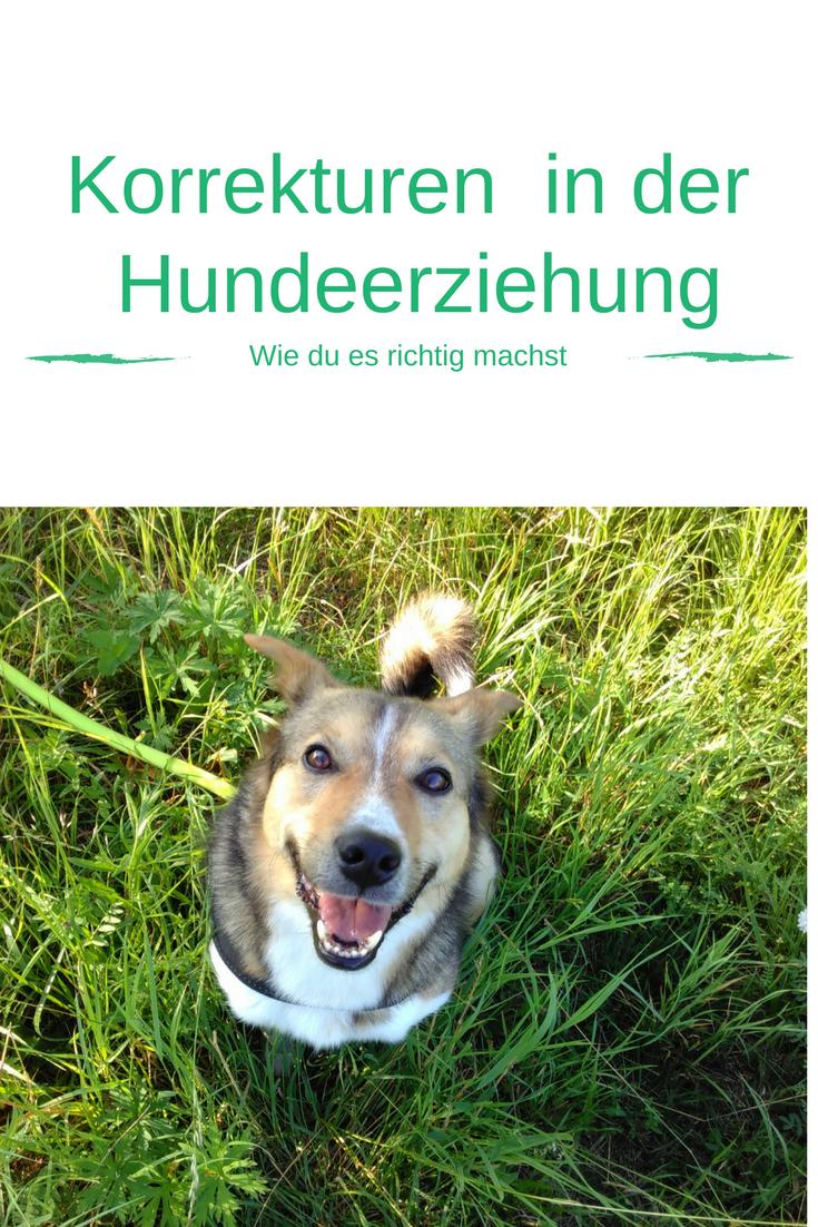 Korrekturen In Der Hundeerziehung Hundeerziehung Hunde Hundchen Training