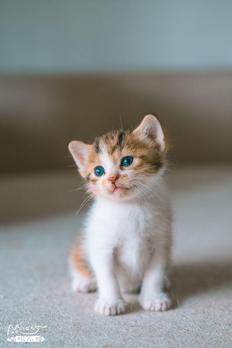 物是心非事事非 抬眼低眉 Cute Baby Cats Pretty Cats Cute Fluffy Kittens