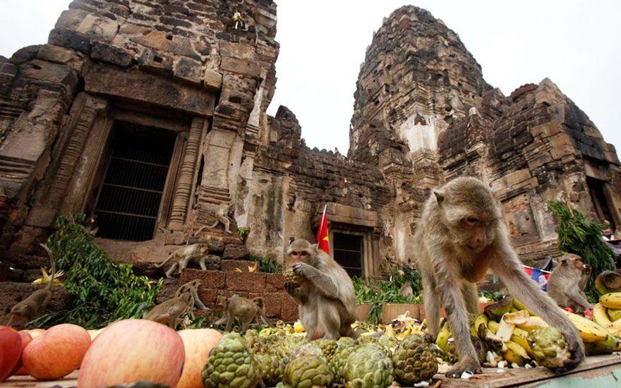 Monkey Buffet Festival (Thailand) Pin by ··· www.alejandrocebrian.com ··· https://www.pinterest.com/alejandrobox