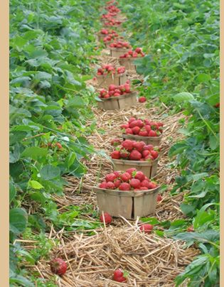 Barkers Farm -::- a vegetable & cut flower farm