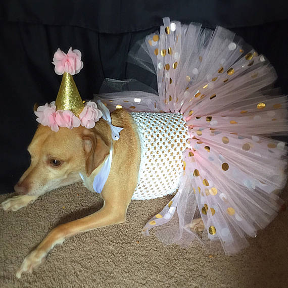 Birthday Dog Outfit Dog Birthday Pink And Gold Dog Dress Dog