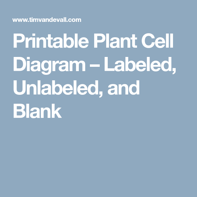 Printable Plant Cell Diagram - Labeled, Unlabeled, and ...