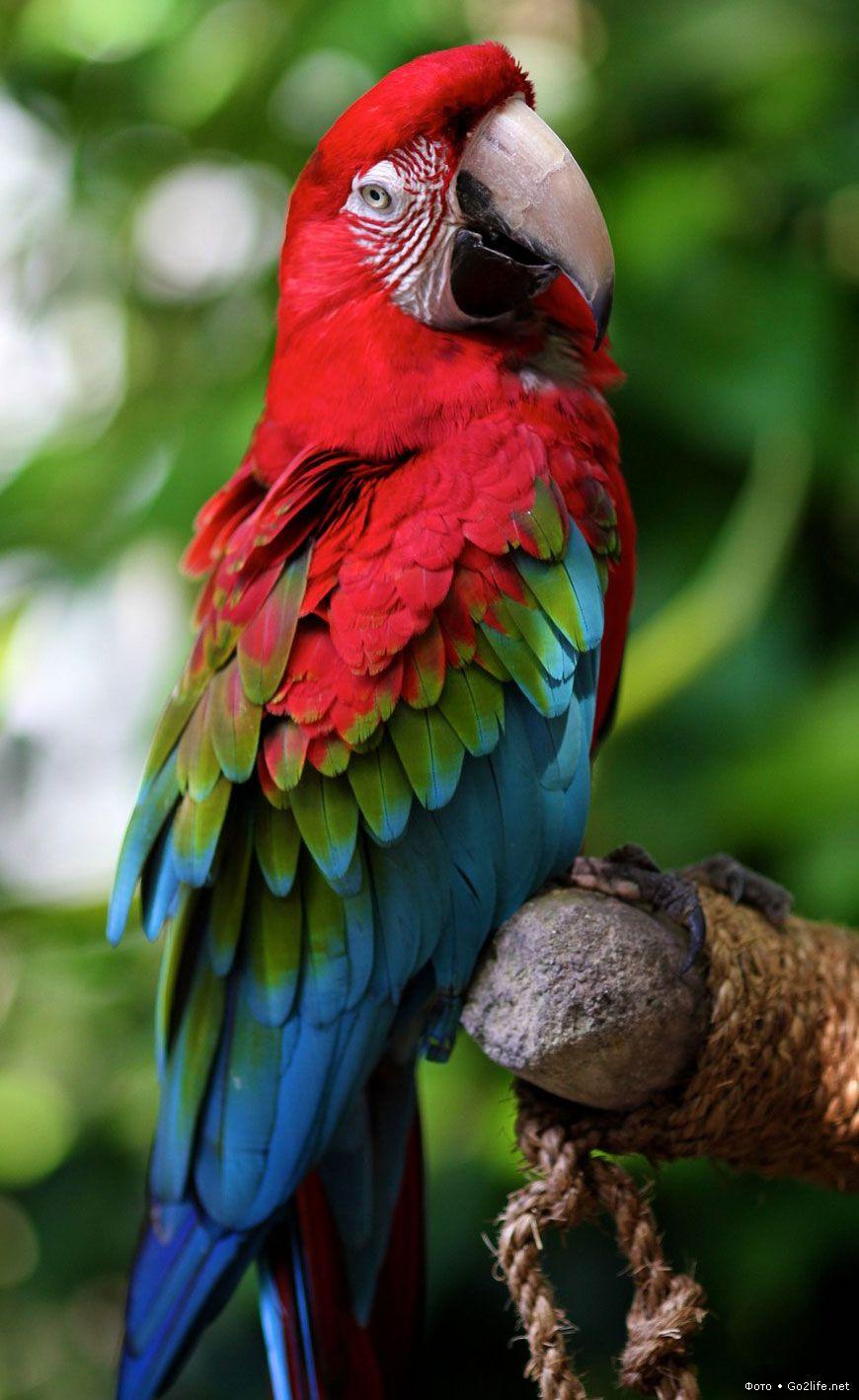 Most Beautiful Birds, Beautiful Birds, Parrot