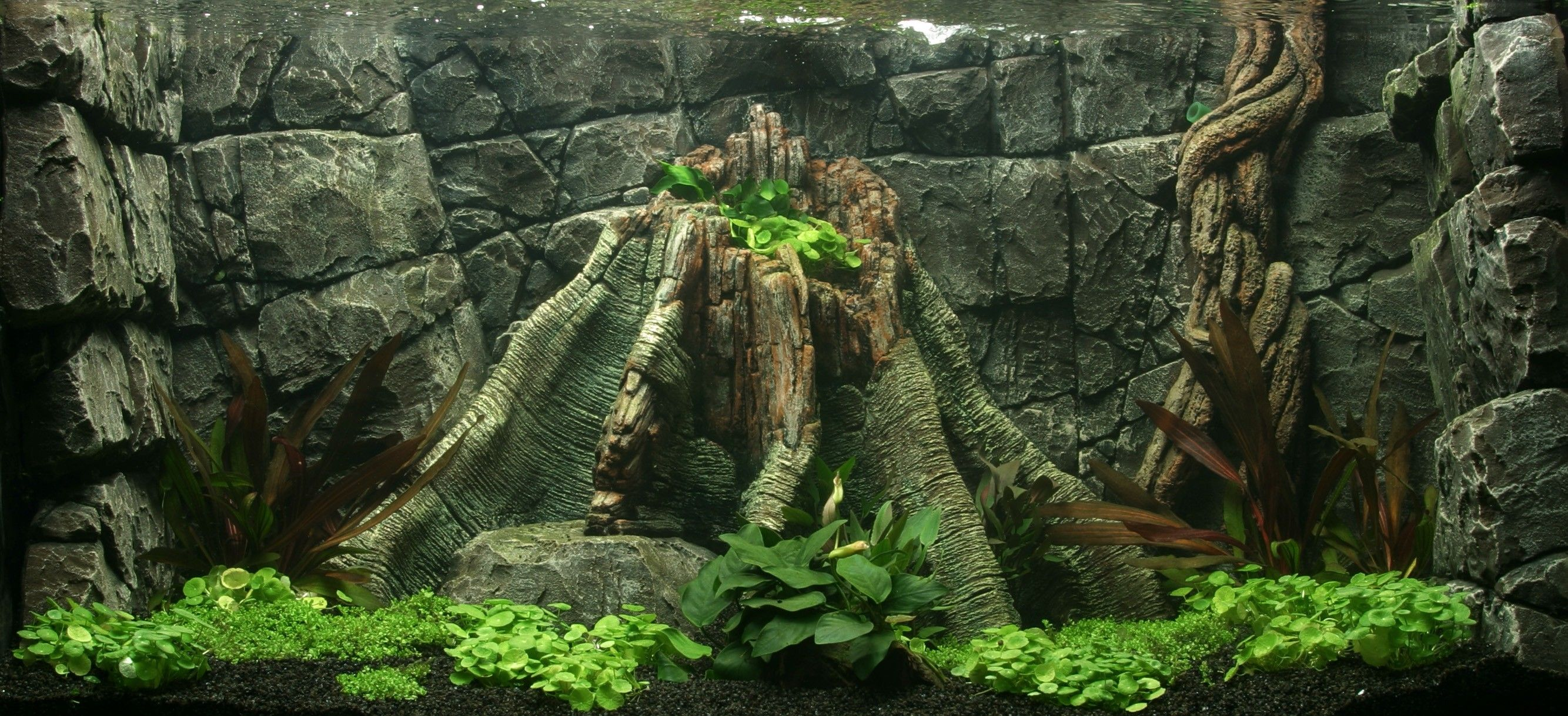 These are aquariums This is the art of a aquascaping
