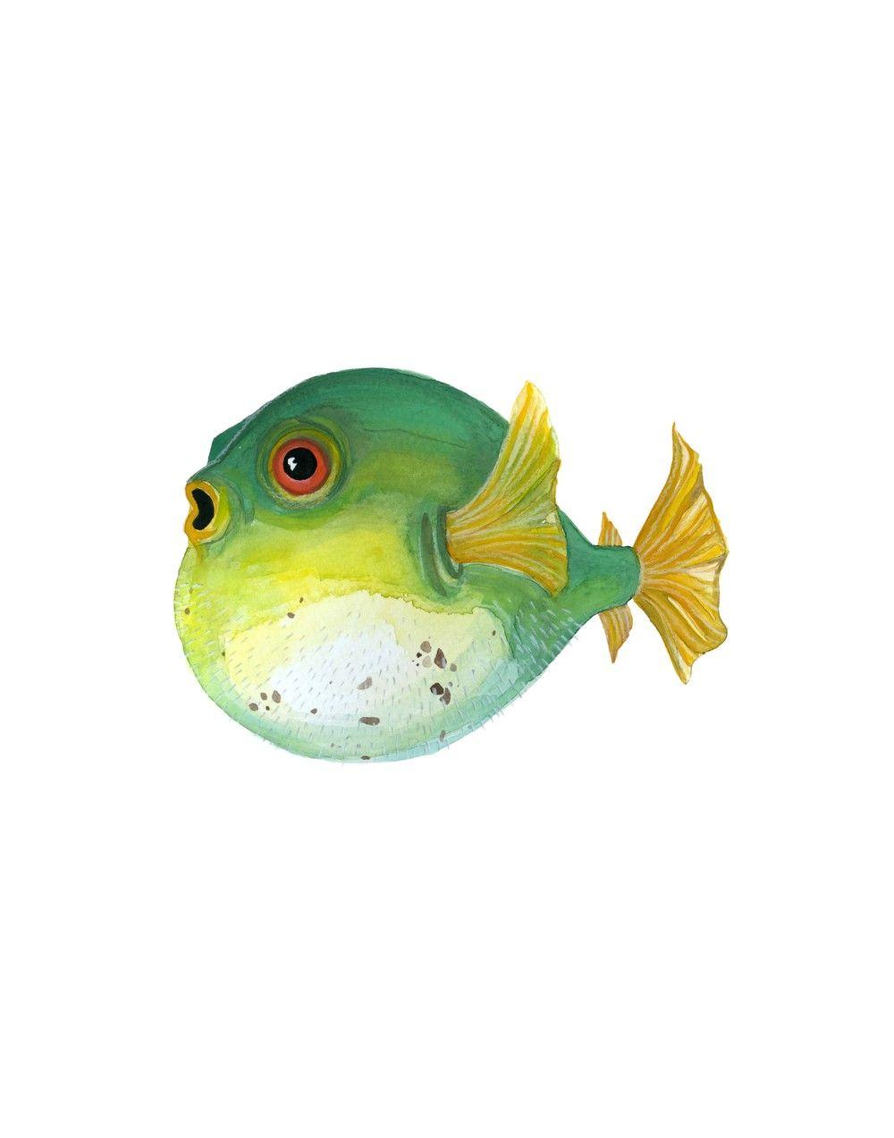 Puffer fish watercolor for Puffer fish art