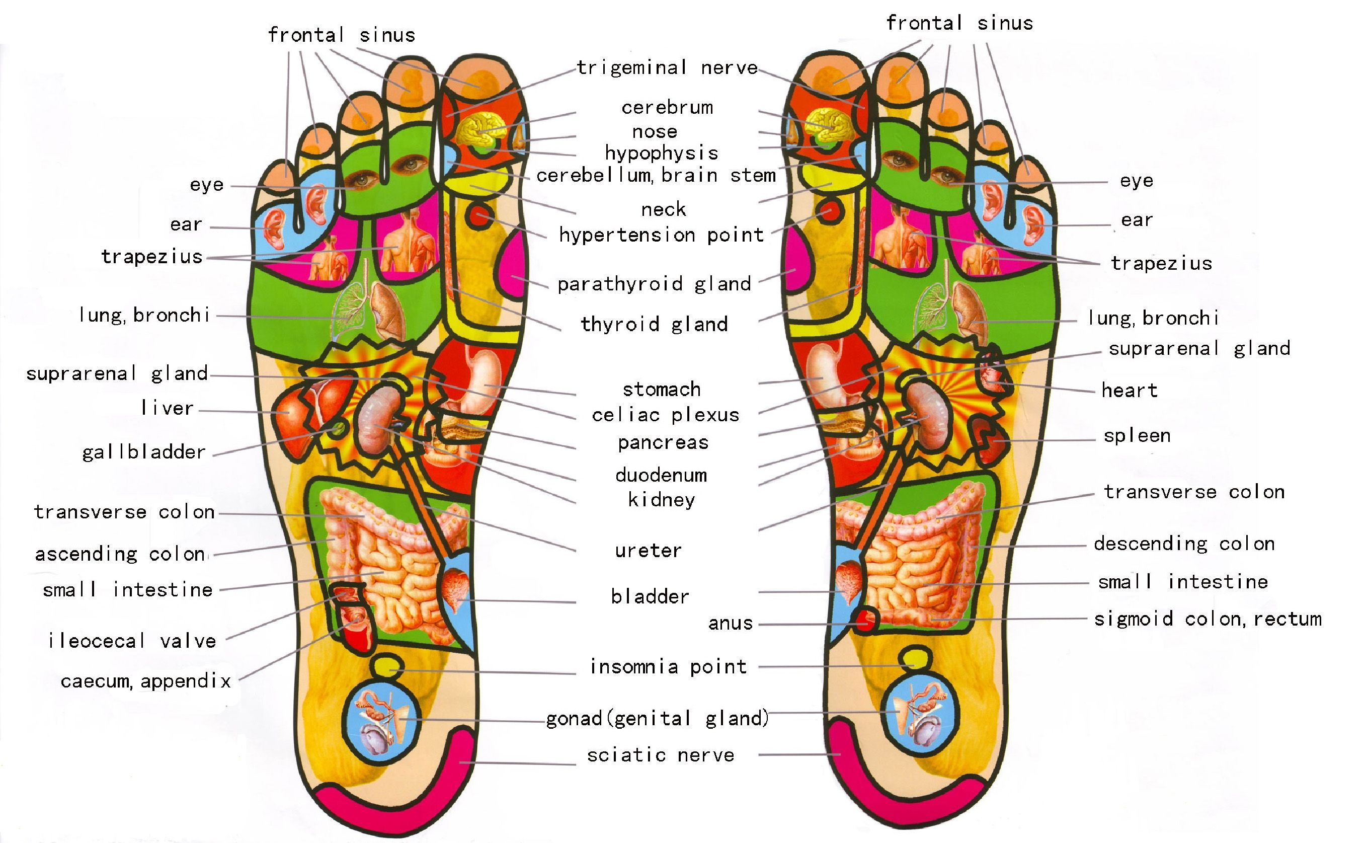 Female Pressure Points On Feet Google Search Foot Reflexology Reflexology Foot Chart Foot Massage
