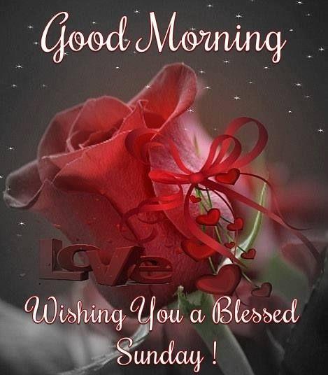 Good morning daily blessings sunday pinterest happy sunday daily blessings sunday pinterest happy sunday quotes sunday quotes and sunday greetings m4hsunfo