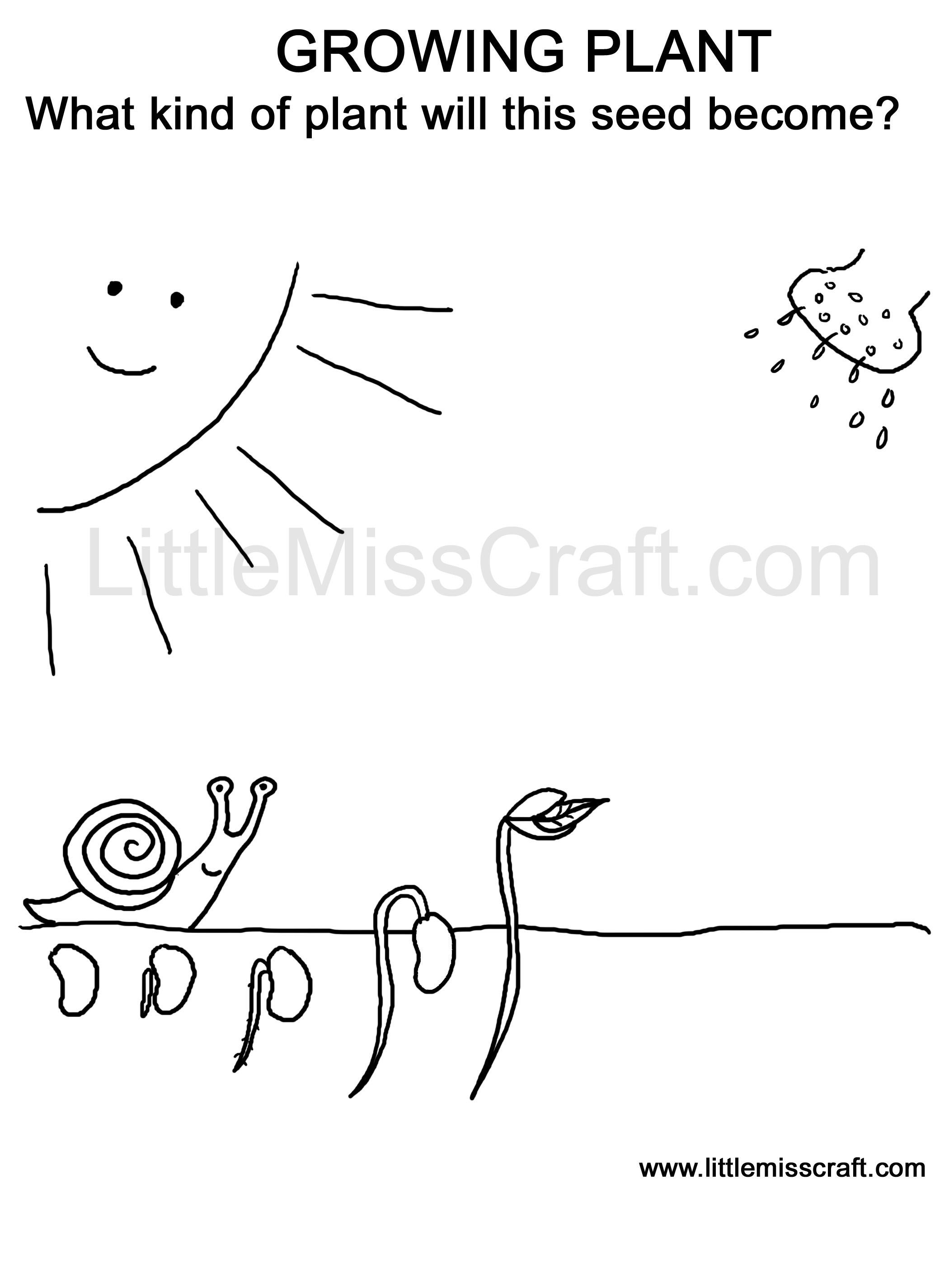 Coloring Page Doodle Printable Germinating Seed Grow To