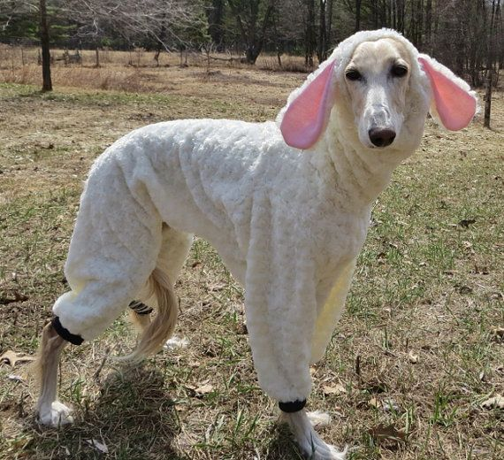 It S Tough To Find Costumes For Greyhounds Since They Aren T