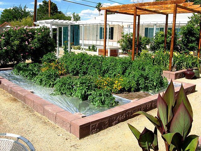 Marvelous Las Vegas Gardening   Tomato Plants