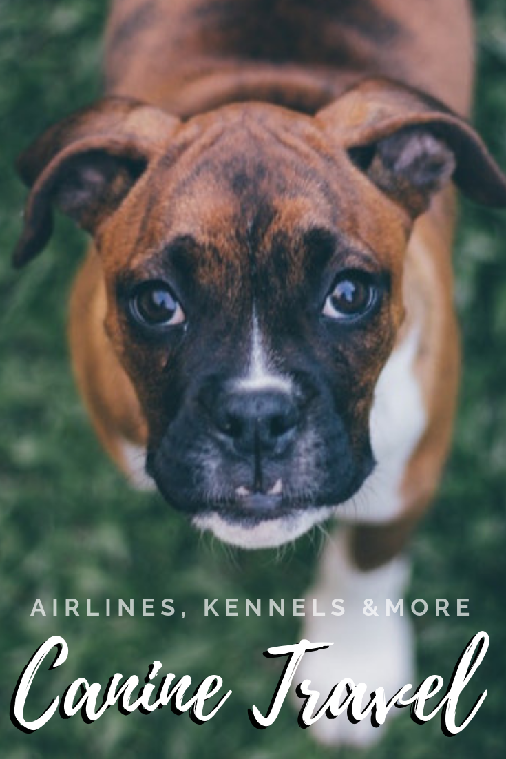 With careful planning, your #dog can still have a great time while you're out of town. So, what are your options for boarding, dogsitting, etc. when you #travel? Or, if you're going to take your pooch, which airlines allow it?