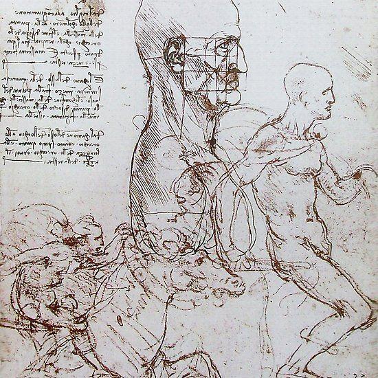 Leonardo Da Vinci Anatomical Drawings Profile Of A Man And Study Of