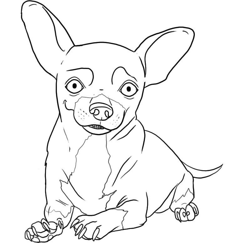Pin by Coloring Fun on Dogs | Pinterest | Chihuahua, Coloring pages ...