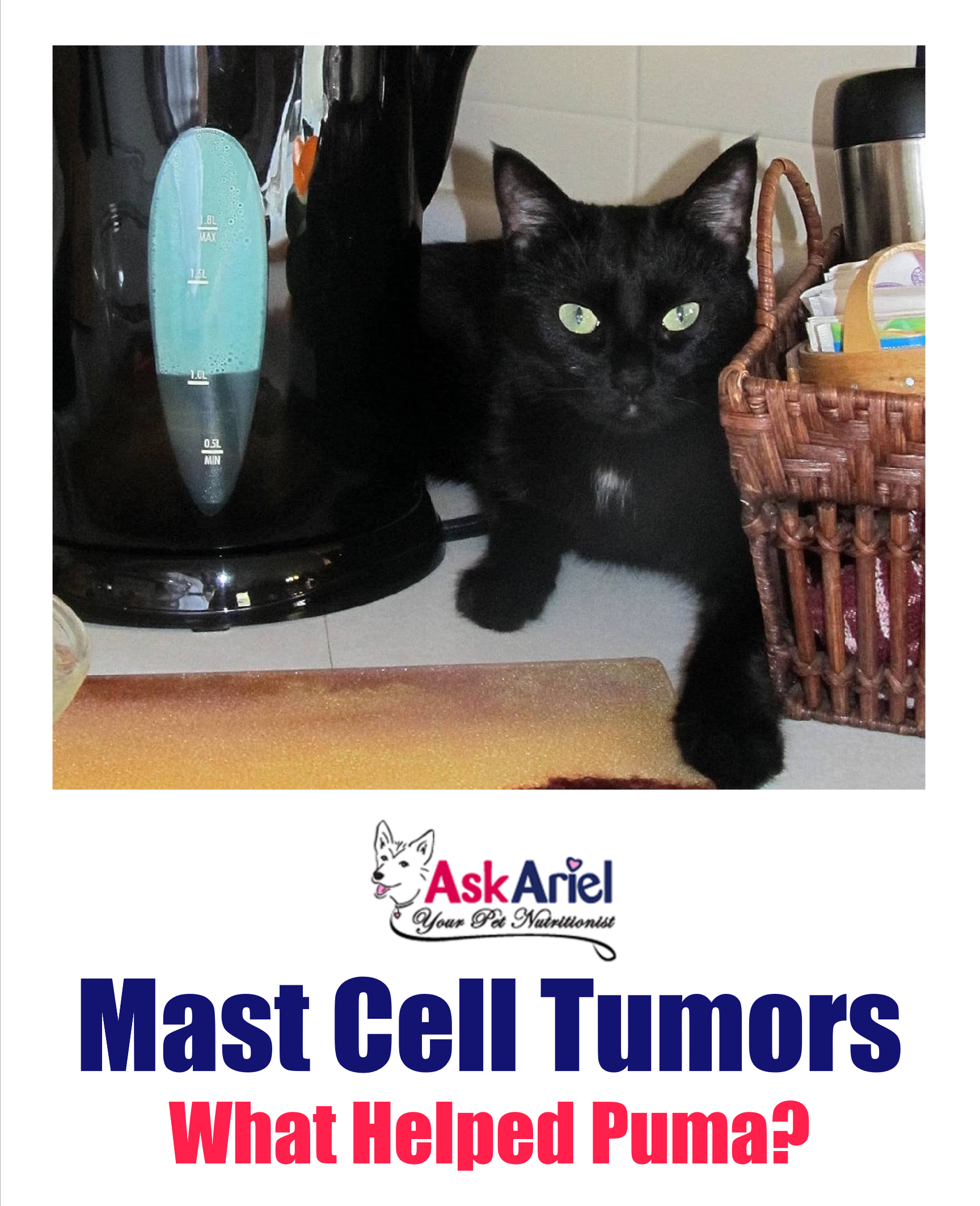Puma had a malignant mast cell tumor in her small