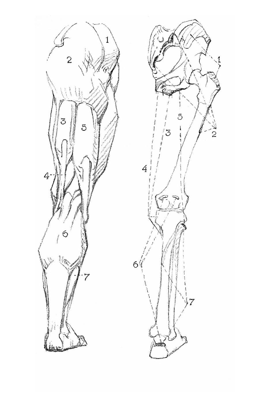 Constructive Anatomy by George Bridgman | AnatoRef - Art Anatomy ...