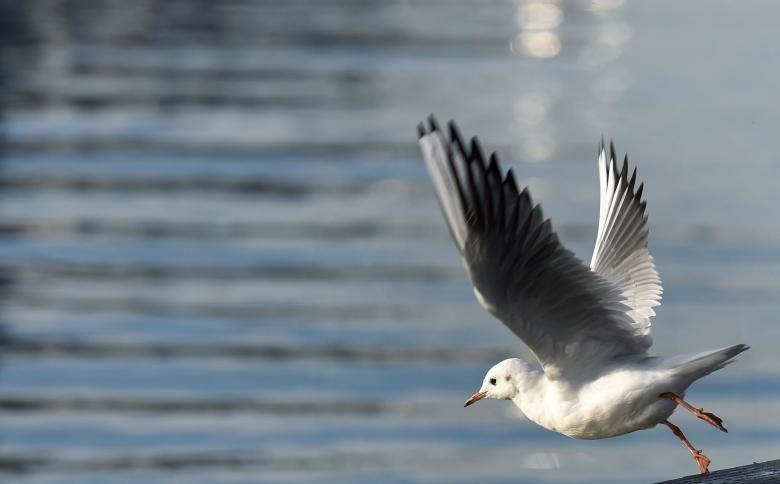 طير النورس على ضفاف بحيرة هيرشينغ في ألمانيا Sea Birds Weird News Weird Stories