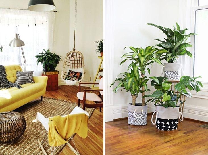 Plantas para alegrar el hogar decorar tu casa es facil - Flores para decorar la casa ...