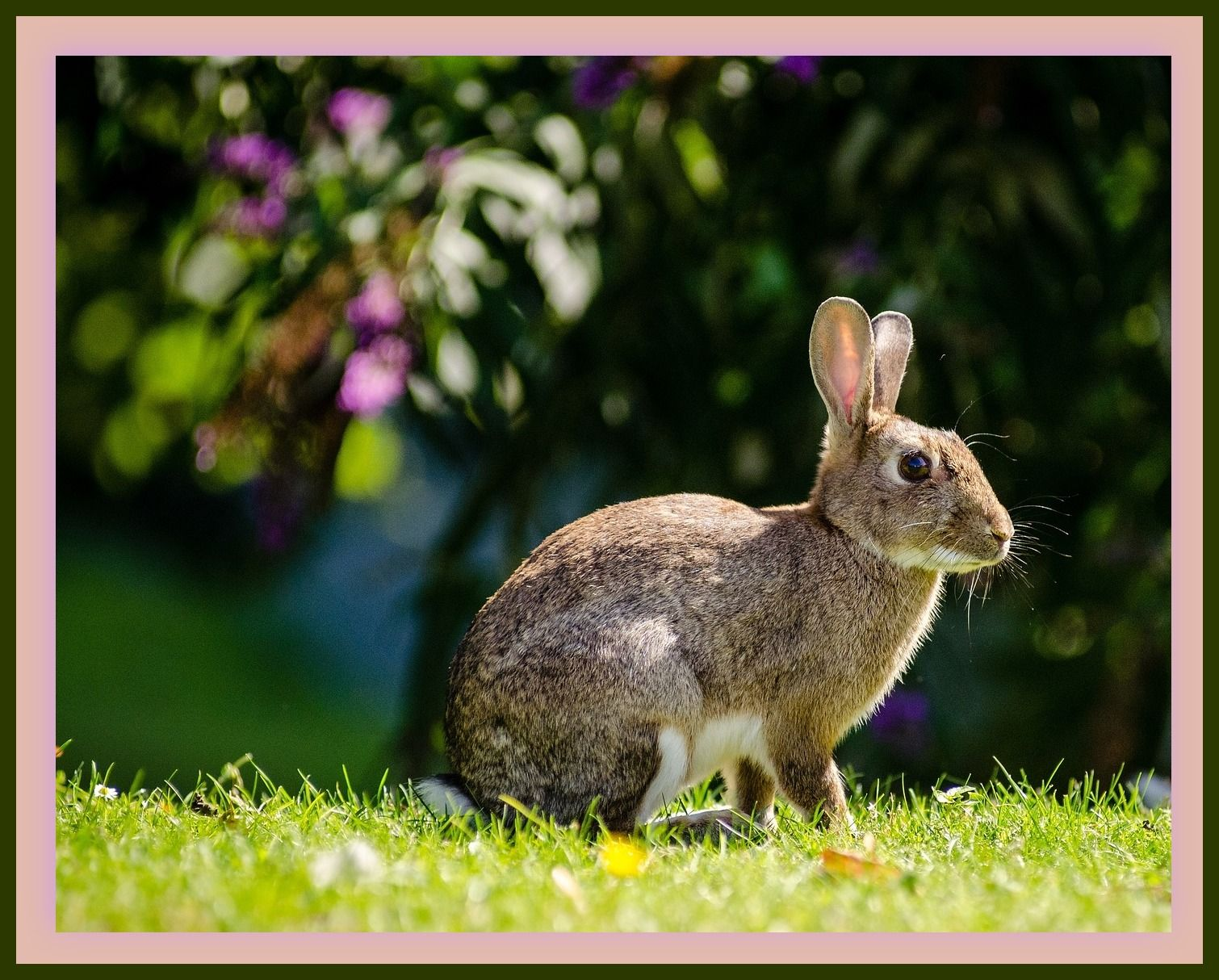 Rabbits Rabbit pictures, Pets, Rabbit
