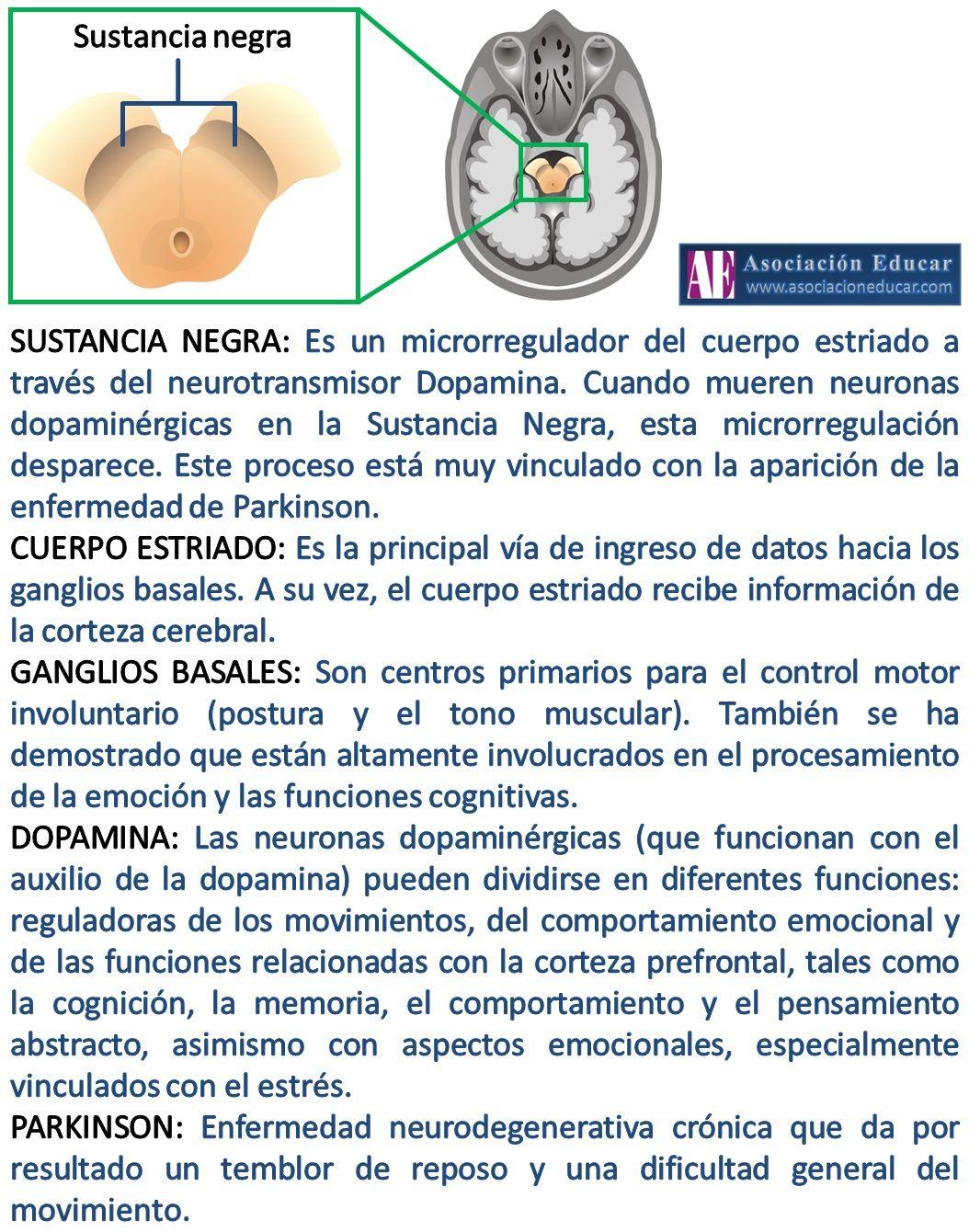 Infografía Neurociencias: Sustancia negra. | Asociación Educar ...