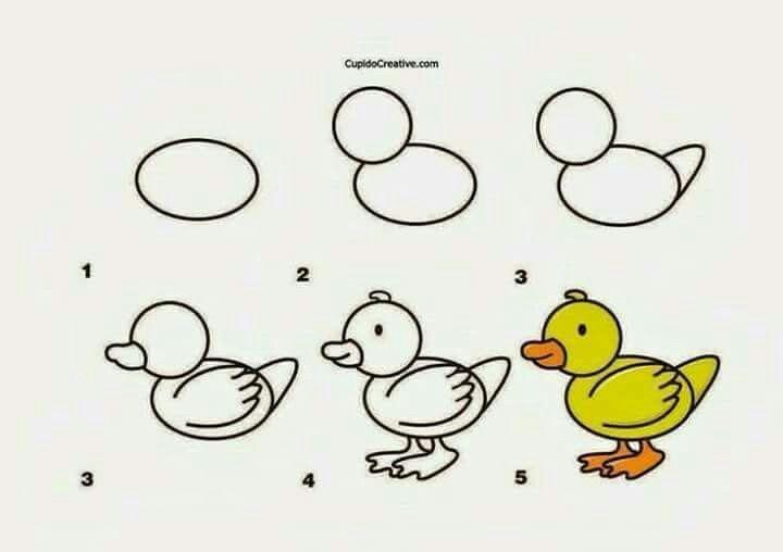 Dibujando Patito Drawing Lessons Gambar Hewan Cara Menggambar