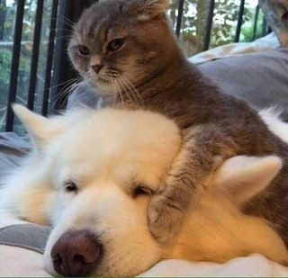 CaT cHoKeS BiG dOg tO pAiNfUl DeAtH : PeopleFuckingDying