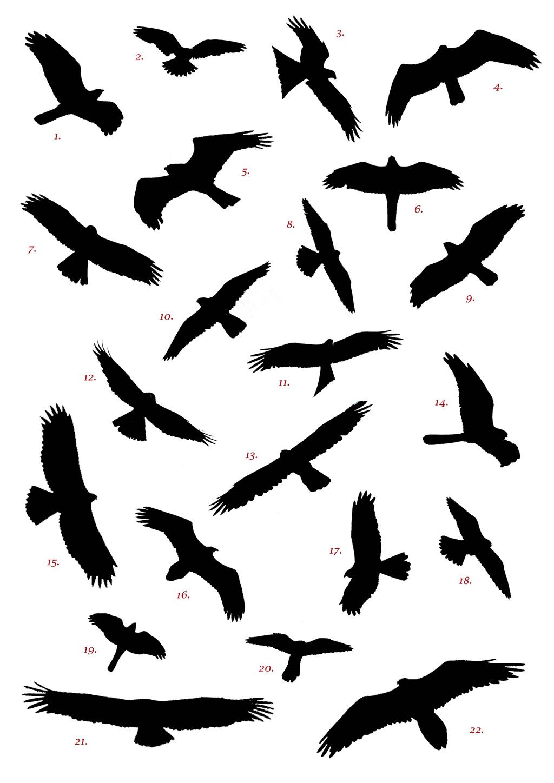 улетающие птицы тату картинка подробный прогноз погоды