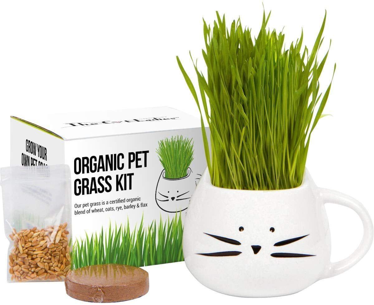 Organic Cat Grass Growing Kit in 2020 Pet grass, Cat
