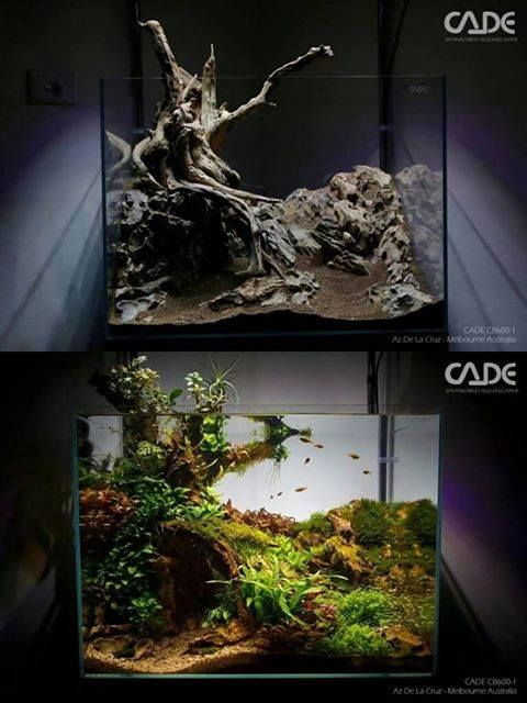 Pingl par stephanus mardianto sur aquascape pinterest for Aquarium cadre