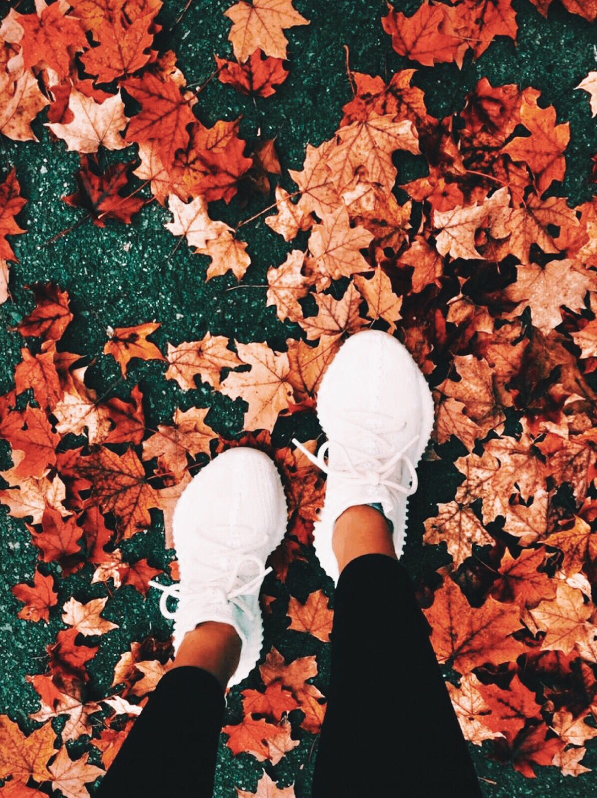 madisonheberlie #autumnphotography