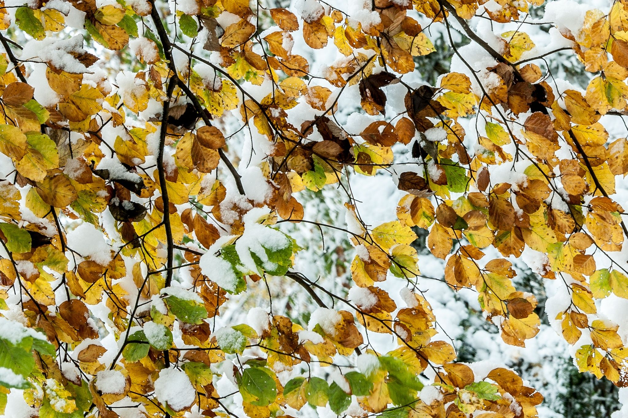 Autumn stone nude