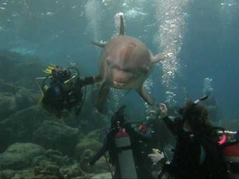 Scuba Divers from Atlanta Experience a Dolphin Div…   Favorite ...
