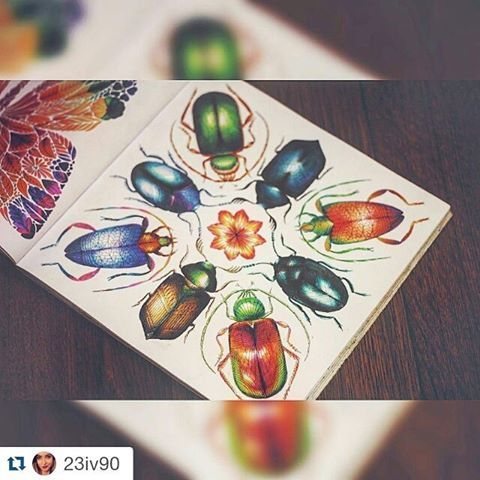 Beetle Bug Insect Nature Bugs Animal Beautiful Wings Love Milliemarotta Tropicalwonderland Coloringbook Adultcoloringbook Colouring