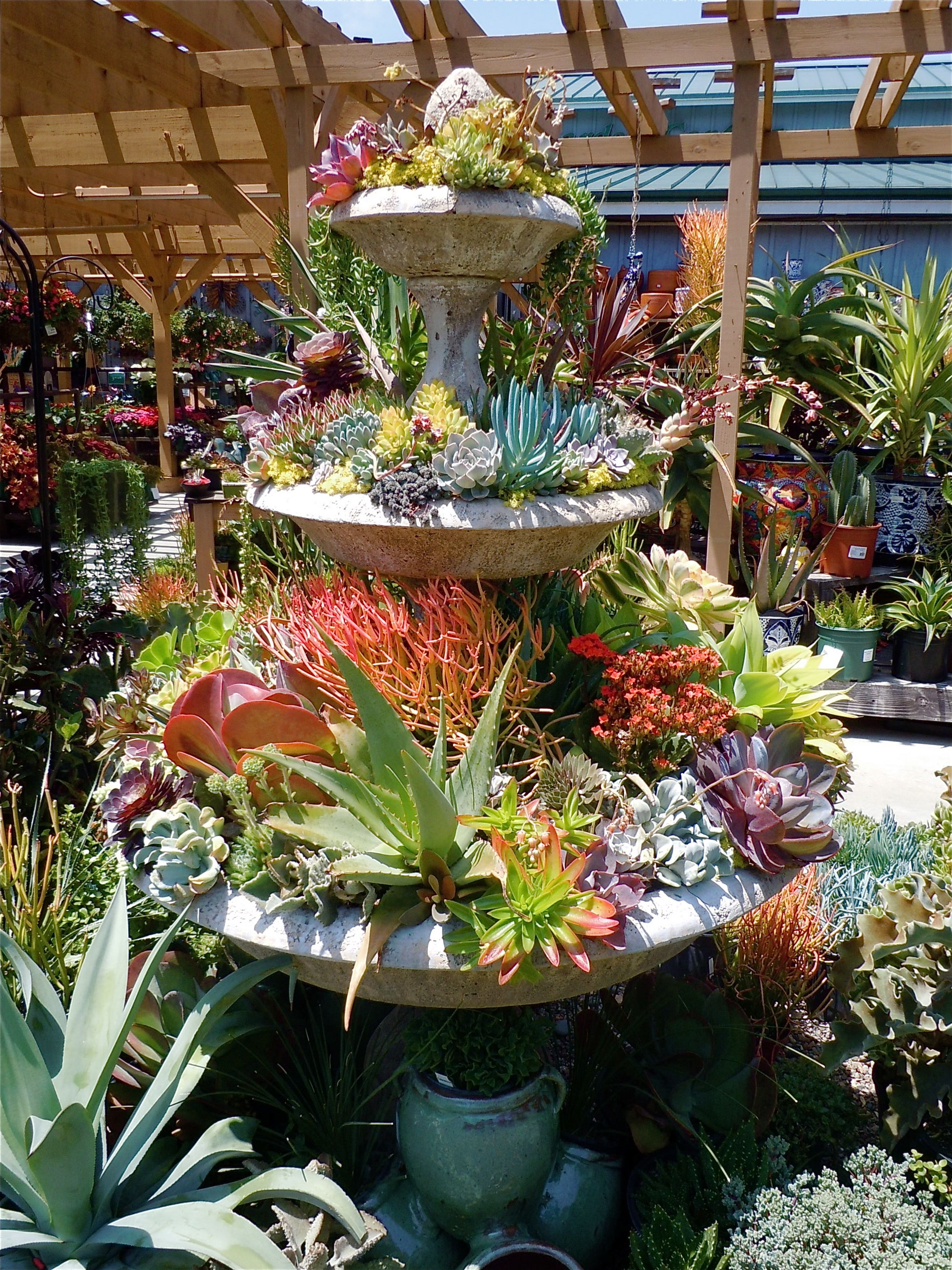 Another Gorgeous Succulent Packed Fountain Seen At Armstrong Nursery In Newport Beach Ca Photographed By Nancy For Www Dplandscape