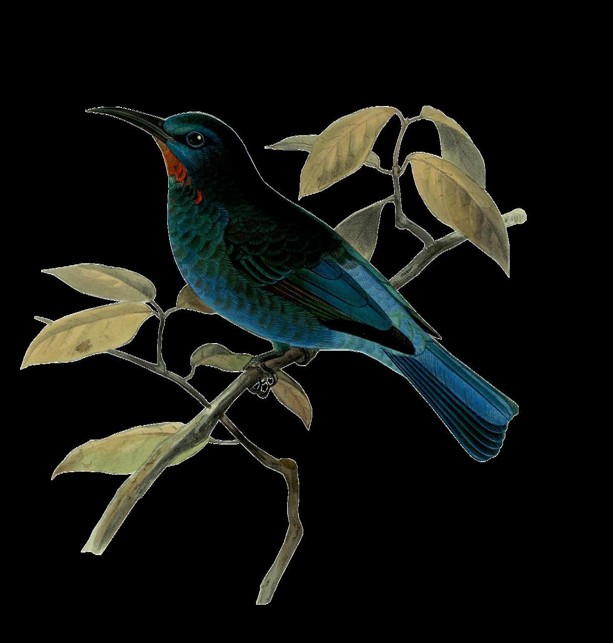 Птичка на веточке | Птицы, Птичка, Картинки