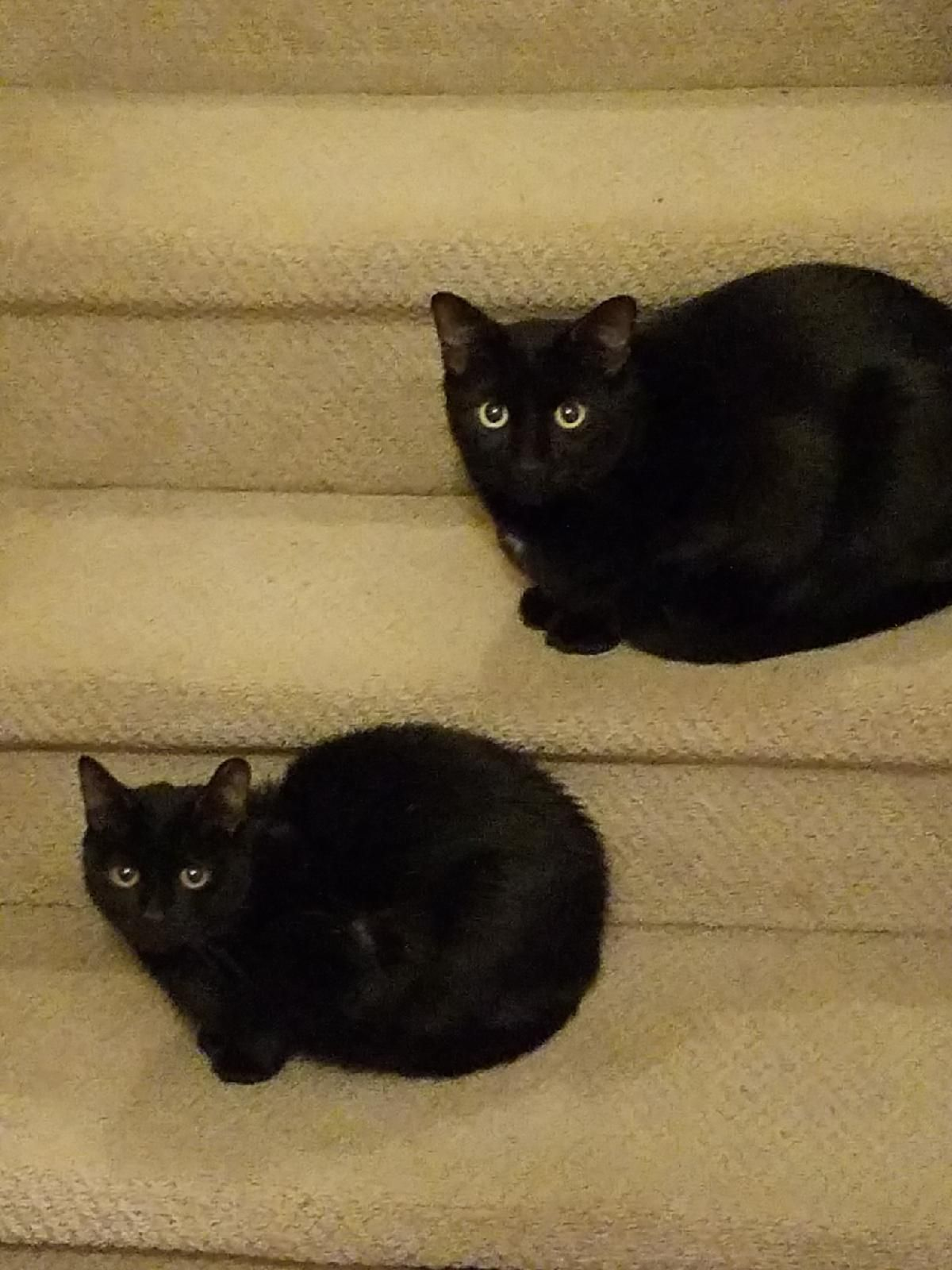 Stair Steps Baby Cats Cats And Kittens Black Cat