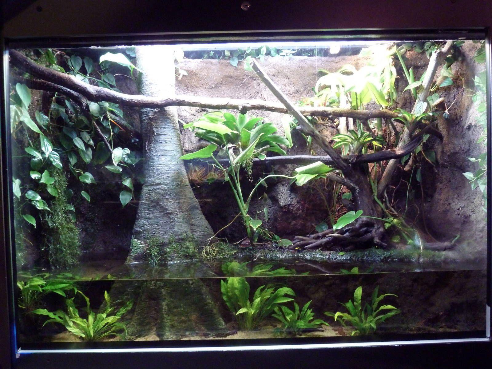Fish tank terrarium - 104 Best Images About Fish Tanks Terrariums Fairy Gardens On Pinterest Moss Terrarium Water Terrarium And Terrarium