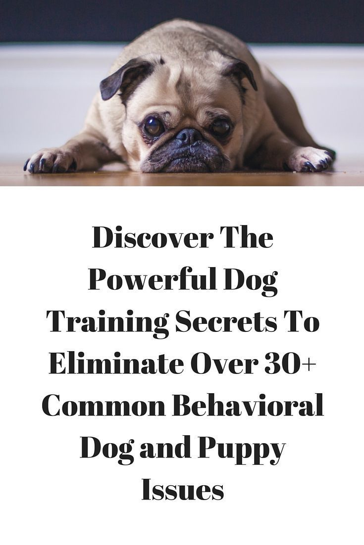 There Are A Few Real Keys To Dog Training Whether You Are Trying