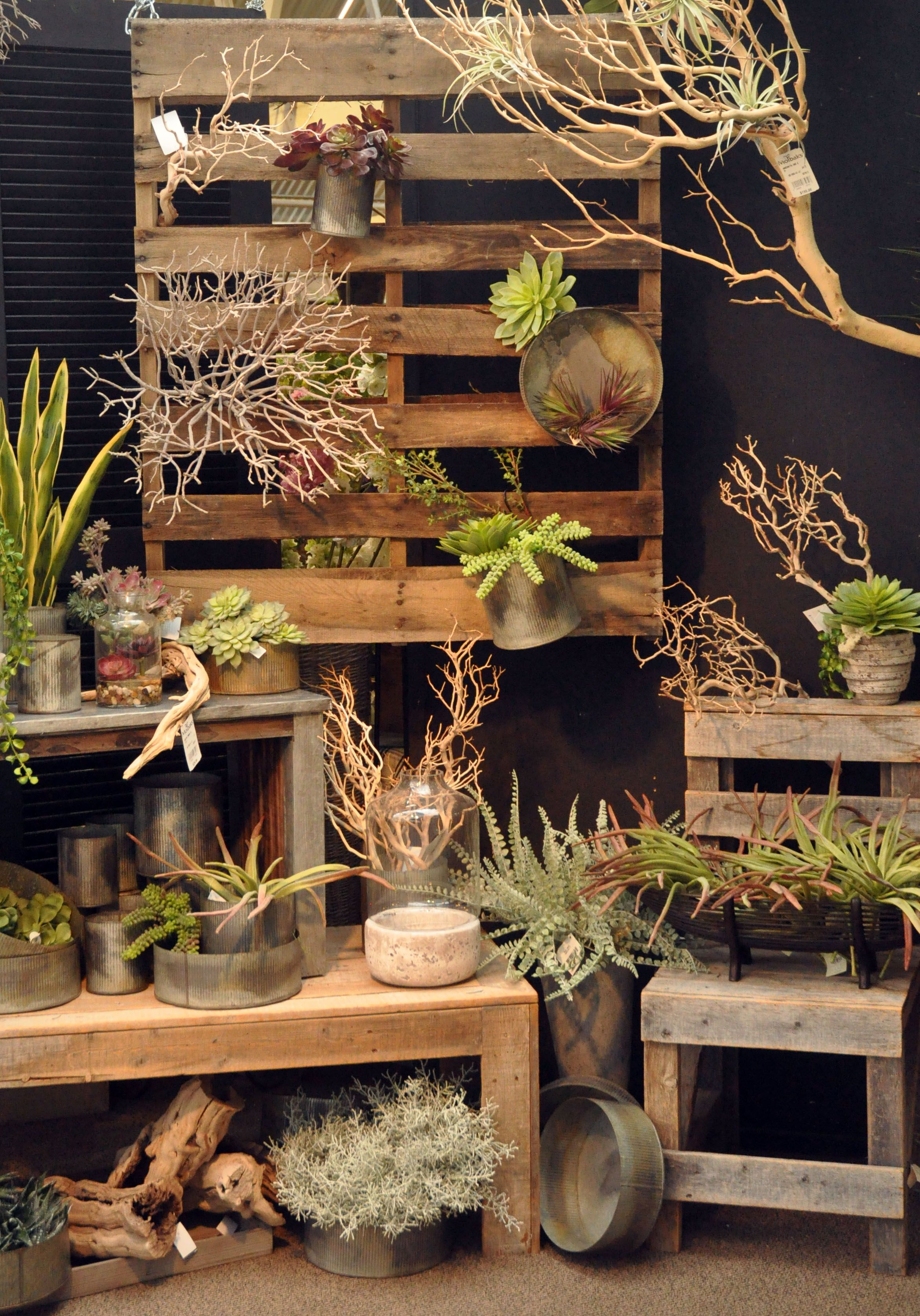 Everlasting Succulent display at Molbaks in Woodinville | Found ...