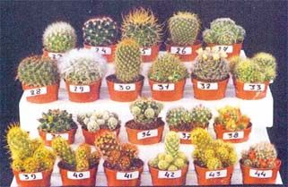 каталог с фотографиями и названиями кактусов и других ...