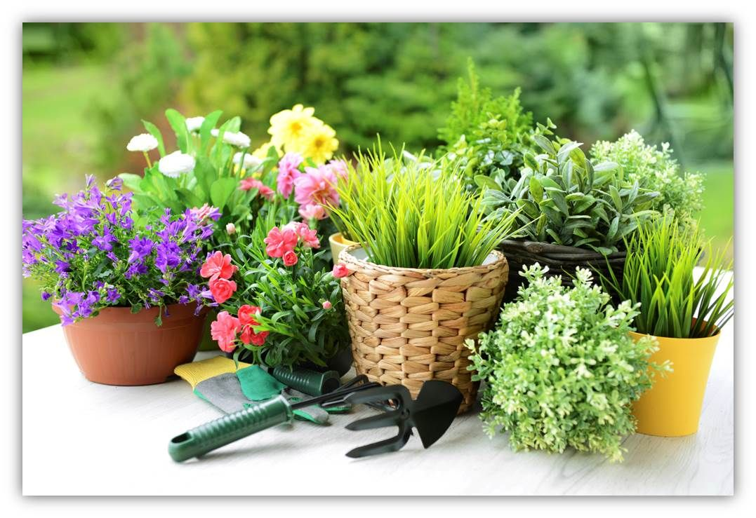 Posts About Spring Gardening Tips On Etcetera!