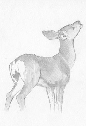Deer sketch by aspera deviantart com on deviantart