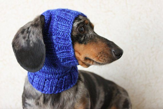 KNITTING PATTERN Mini Dachshund Dog Hat Small Dog Hat Dog Clothes Classy Dog Hat Knitting Pattern