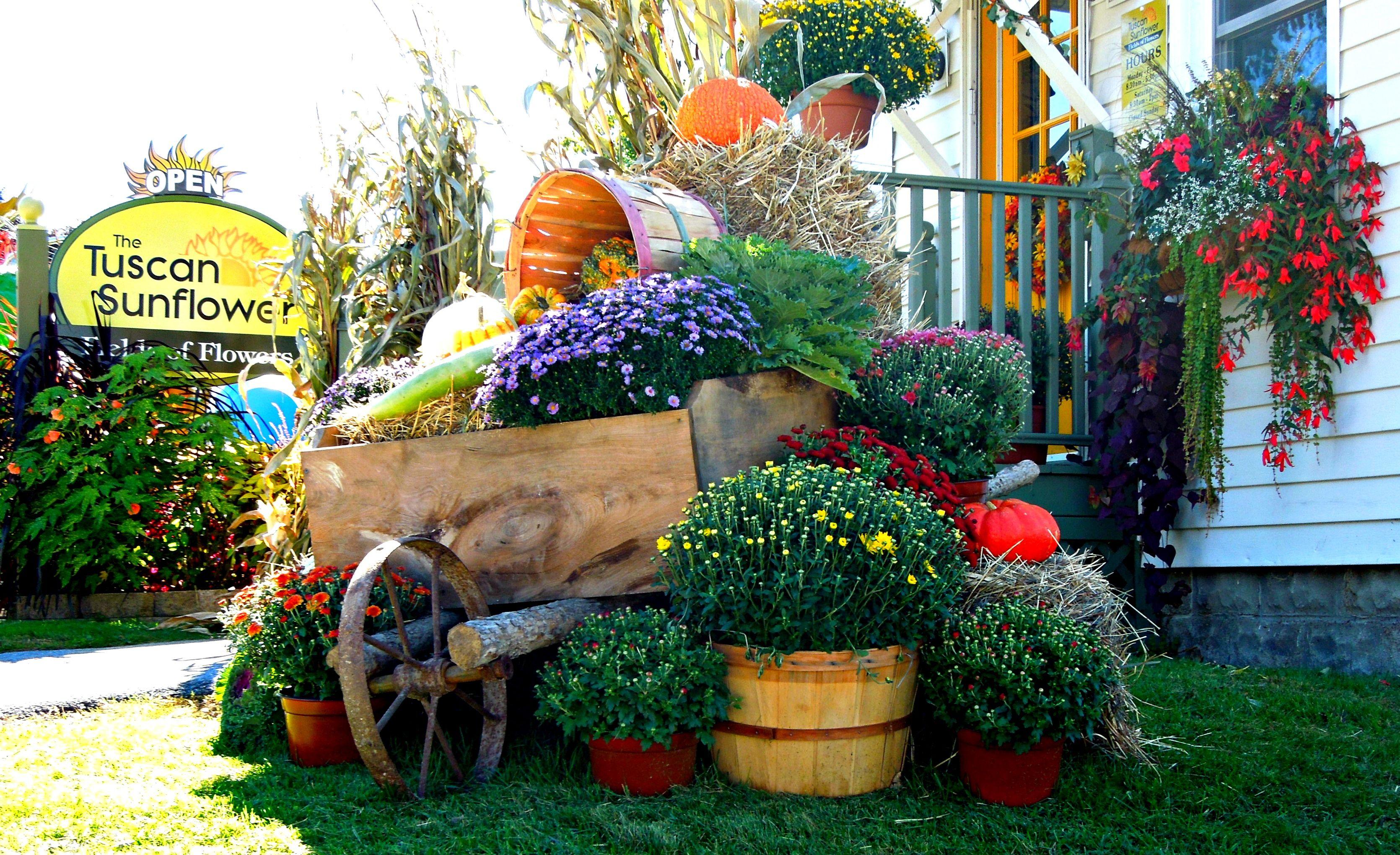 The Glorious colors of Autumn at The Tuscan Sunflower, Bennington, Vt