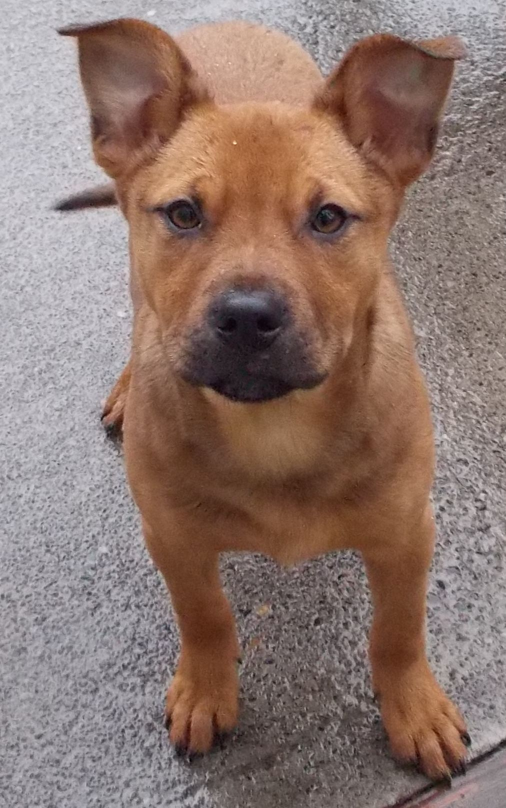 That face! Chester needs a home! Help! Animal hospital
